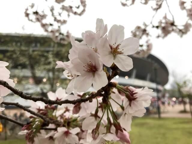 桜越しのCスタ